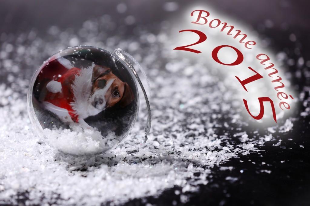 eko 2015 bonne année regart photo